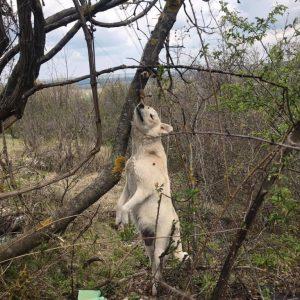 Да пребиеш куче и да го довършиш обесено на дърво – това става в Червен бряг