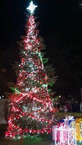 Светлините на коледната елха в центъра на Плевен ще грейнат тази вечер
