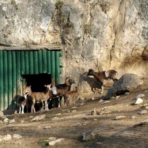 Плевенският зоопарк с безплатен вход днес за децата по повод празника им
